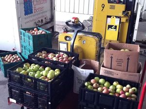 Delivering apples gleaned at Reed Valley Orchard to God's Pantry Food Bank for distribution.